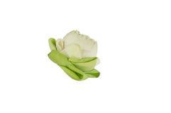 Zbliżenie kwiatu lotos Obraz Royalty Free