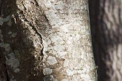Zbliżenie liszaj na drzewie Zdjęcia Royalty Free