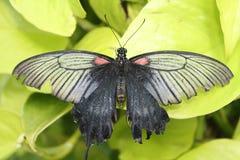 Zbliżenie motyl Obrazy Royalty Free