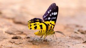 Zbliżenie motyl Zdjęcie Stock