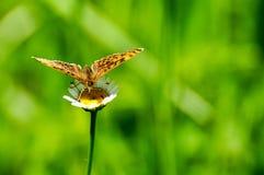 Zbliżenie motyl na kwiacie, motyl i kwiat, motyl na kwiatu rozmytym tle Obrazy Stock