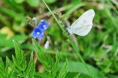 Zbliżenie motyl na kwiacie, motyl i kwiat, motyl na kwiatu rozmytym tle Obraz Stock