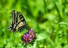 Zbliżenie motyl na kwiacie, motyl i kwiat, motyl na kwiatu rozmytym tle Fotografia Stock