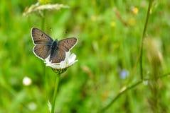 Zbliżenie motyl na kwiacie, motyl i kwiat, motyl na kwiatu rozmytym tle Obrazy Royalty Free