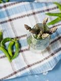 Zbliżenie organicznie asparagus w butelce Fotografia Stock