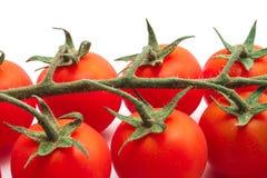 Zbliżenie pomidory Obraz Royalty Free