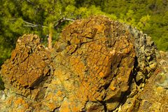 Zbliżenie skalista powierzchnia wzgórza w lesie blisko Kemer, turczynka Zdjęcia Royalty Free