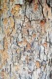 Zbliżenie tekstury skóra drzewo Zdjęcia Royalty Free
