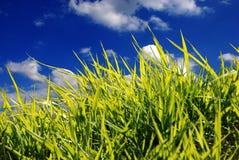 zbliżenie trawa zieleni Zdjęcia Stock