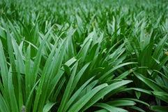 zbliżenie trawy. Fotografia Stock