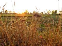 Zbliżenie trawy kwiat Zdjęcia Royalty Free