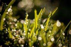 Zbliżenie waterdrops Fotografia Royalty Free