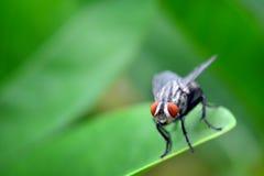 Zbliżenie widok komarnica fotografia royalty free