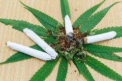 Zbliżenie wysuszona marihuana Obrazy Royalty Free