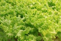 Zbliżenie zieleni warzywa Obrazy Royalty Free