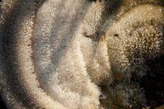 Zbliżenie zim waterdrops i hoarfrost Obrazy Royalty Free