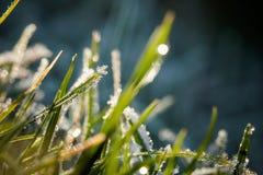 Zbliżenie zim waterdrops i hoarfrost Zdjęcie Stock