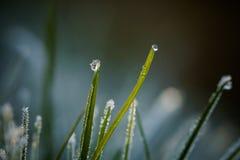 Zbliżenie zim waterdrops i hoarfrost Obraz Royalty Free
