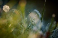 Zbliżenie zim waterdrops i hoarfrost Fotografia Royalty Free