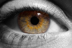 zbliżenia oko w b Zdjęcie Stock