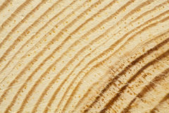 Zbliżenie sosny tekstura z narysami Obraz Royalty Free