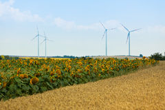 Zboża i słoneczników poly widok Obraz Stock