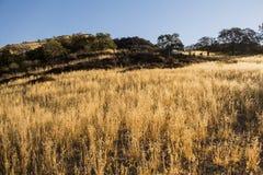 Zbożowa łąka Zdjęcia Stock