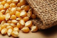 Zbożowa kukurudza w małym worku Zdjęcia Royalty Free