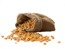 Zbożowy kukurydzany zbliżenie na białym tle Obrazy Royalty Free