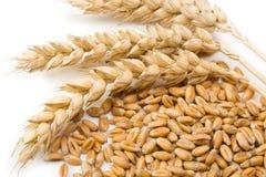 Zboże i pszeniczny kolec Obraz Stock