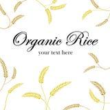 Zbożowy organicznie Zdjęcia Royalty Free