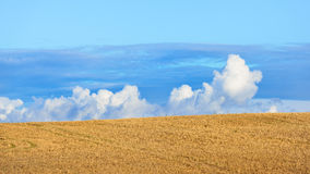 Zboża pola ornamentacyjny cloudscape Obraz Stock