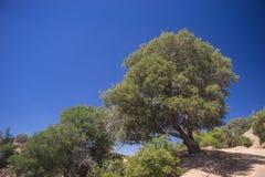 Zbocza drzewo w Kalifornia pustkowiu fotografia royalty free