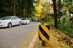 Zbocze góry drogowa poręczówka w złotych liściach gingkoes w afte Obrazy Royalty Free