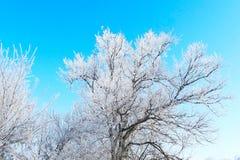 zbocze góry frosty Fotografia Royalty Free
