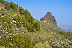 Zbocze góry krajobraz na Granu Canaria wyspie, Hiszpania Zdjęcia Stock