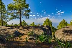 Zbocze góry krajobraz w Tamadaba naturalnym parku na Granu Canaria wyspie, Hiszpania Obrazy Royalty Free