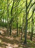 Zbocze las w wiośnie z jaskrawym - zielony nasłoneczniony ulistnienie i jarzębaci cienie na ziemi zdjęcia royalty free