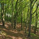 Zbocze las w wio?nie z jaskrawym - zielony nas?oneczniony ulistnienie i jarz?baci cienie na ziemi zdjęcie stock