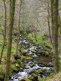 Zbocze strumienia bieg chociaż mech zakrywający kołysa i głazy z otaczać wczesnego wiosna lasu krajobraz Fotografia Royalty Free