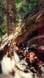zbutwiały drzewo zdjęcia royalty free