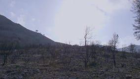 Zdewastowany krajobraz las po ogienia zbiory wideo