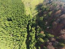 zdjęcie powietrznej leśna Obrazy Royalty Free
