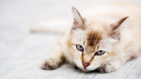 zdjęcie kota wyczerpana Zdjęcie Royalty Free
