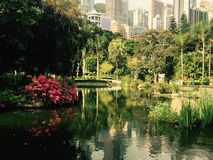 Zdjęcie w Hong Kong parku Obrazy Stock