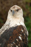 zdobycz spogląda za ptakiem Obrazy Royalty Free