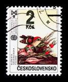 Zdobywca nagrody ilustracja: Elzbieta Gaudasinska, śliniaczek s (Polska) Obraz Royalty Free