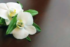 Zdrój orchidei zieleni ręcznik Zdjęcie Royalty Free