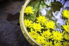 Zdrój terapia z żółtymi kwiatami Zdjęcie Stock