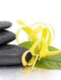 Zdrojów kamienie i Ylang-Ylang kwiat Zdjęcie Stock